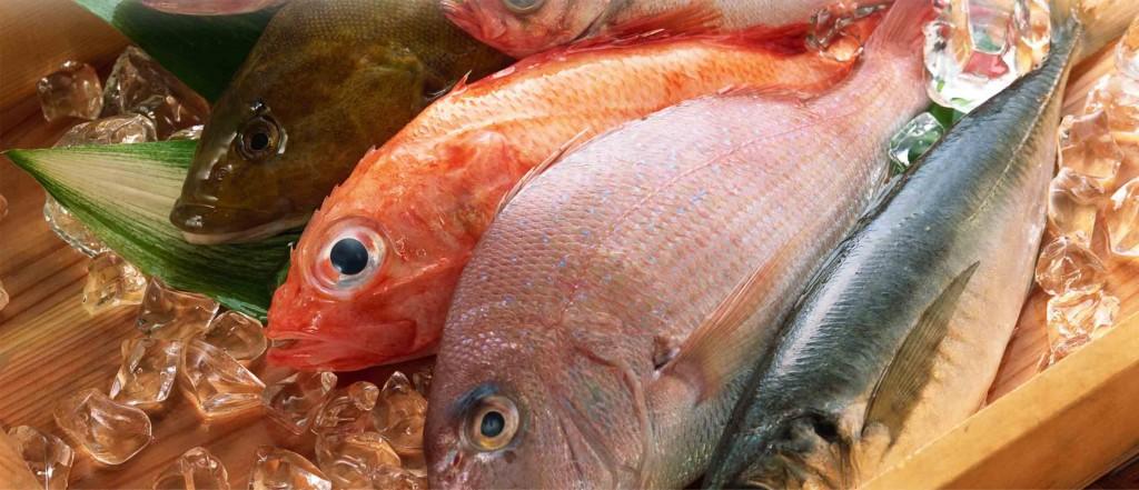 Сертификация рыбы